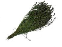 anisovaya myata