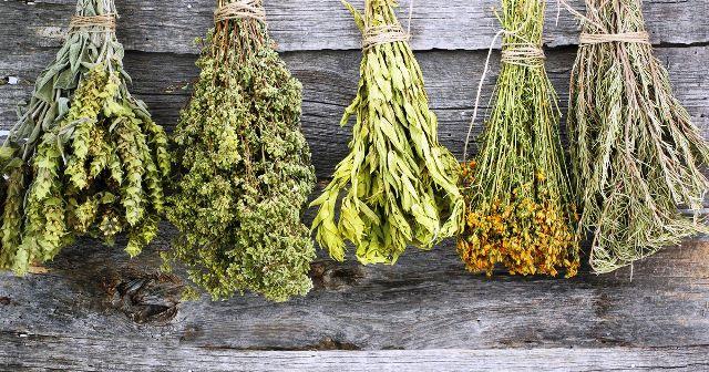 Купить травы для бани и сауны от производителя