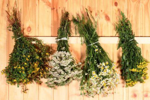 Травы для бани и сауны по оптовой цене